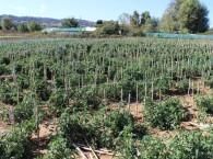Βιολογικό αγρόκτημα